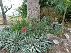 Medizinischen Pflanzen in Panama