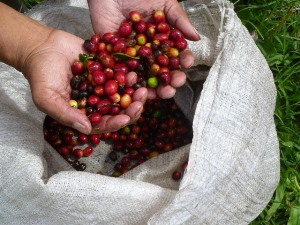 Frischer Kaffee in Bouquete