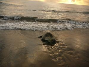 Schildkrötenstrand im Tortuguero Nationalpark