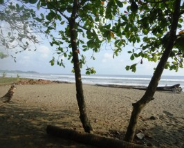 Der raue Strand von Dominical