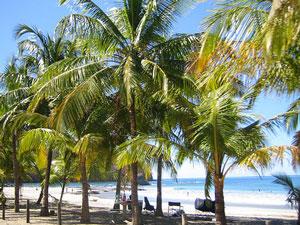 Am Palmenstrand von Sámara