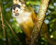 Affen & Naturstrände im Manuel Antonio Nationalpark