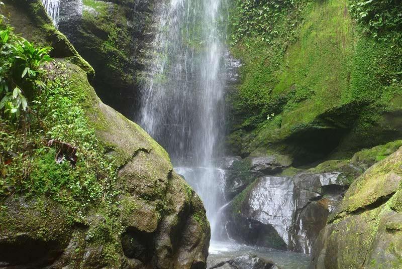 Moos auf den Felsen eines Wasserfalls in Costa Rica