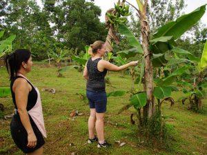 Reisende erntet Bananen