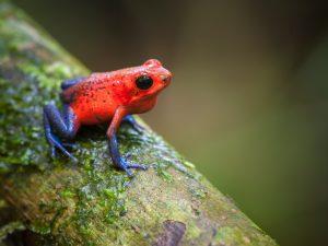 Tierbeobachtungen im Dschungel von Boca Tapada