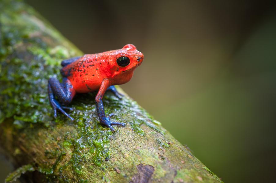 Costa Rica Reisen erlebe-fernreisen Tierwelt