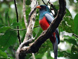 Costa Rica Vogel
