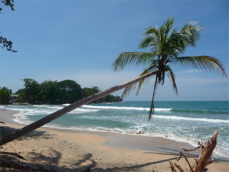 Strand Palme Meer an der Küste Costa Ricas