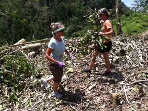Aufräumarbeiten im Dschungel