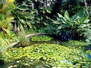 Andromeda-Gärten in Bathsheba