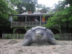 mount-plaisir-trinidad-schildkroete