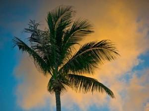 Palme weht im Wind