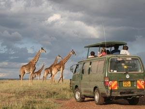 Kenia reizen - safari