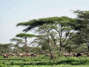 Serengeti tanzania kamperen