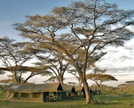 serengeti tanzania private camp boom