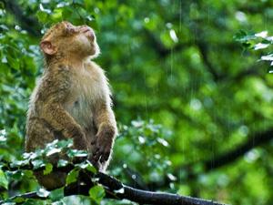 aap in regen