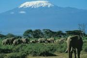 Van tetterende olifant naar snorkelstrand