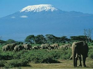 amboseli kenia olifanten