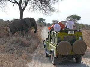 gamedrive olifant kenia tanzania