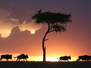 Zebrapad naar de Serengeti