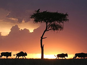 safari Serengeti Tanzania sundown