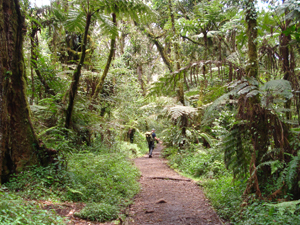 kilimanjaro beklimming bergpas tanzania