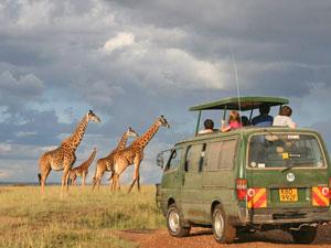 Kenia safari giraffe