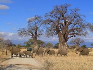 tanzania reis tarnagire national park
