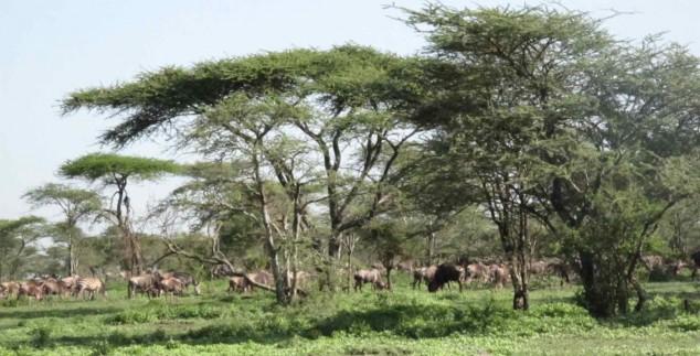 private kamp uitzicht tanzania