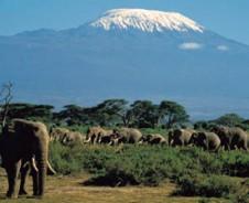 De berg en de olifant
