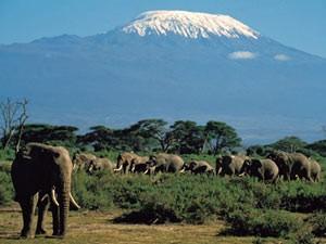 reizen kenia amboseli olifanten