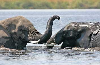rondreis kenia olifanten