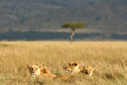 Grenzeloos verliefd op Afrika