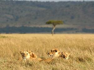 hoogtepunten Kenia Tanzania reis