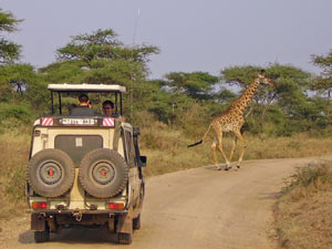 kenia safari masaimara
