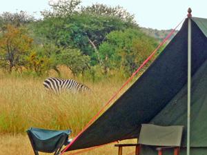 tanzania mobiel kamp zebra