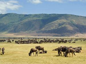 tanzania- ngorongoro
