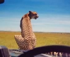 Alle tijd voor safari en meer