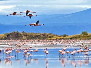 tanzania flamingomeer