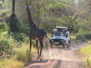 safari tanzania manyara