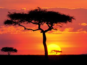 Serengeti Tanzania sunset