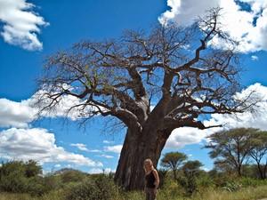 safari tanzania tarangire