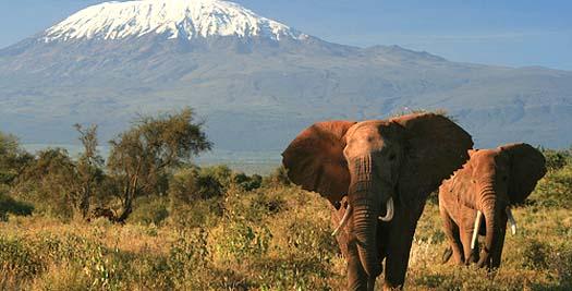 Rondreizen Tanzania - Olifanten