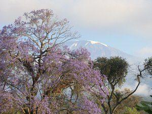 kilimanjaro-easygoing