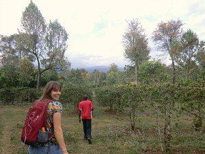 kilimanjaro-plantage-easygoing