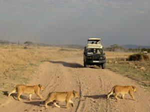 sergengeti tanzania reis