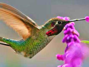 ecuador reizen kolibrie