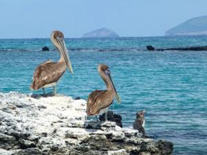 Galapagos-vogels