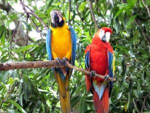 ara-cuyabeno-ecuador