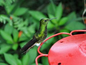 bellavasta-ecuador-vogel